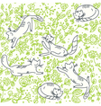 cats in the garden vector image vector image
