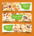 cards with nuts food pecan and nutmeg hazel vector image vector image