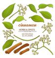 cinnamon elements set vector image vector image