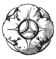 french rosette is made of four divisions vintage vector image vector image