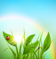 Green grass plantain and ladybugs with sunrise and vector image vector image