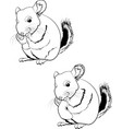 line art chinchilla vector image vector image