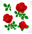 buds red roses with leaves vintage vector image vector image
