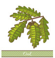colored oak branch in hand drawn style vector image vector image