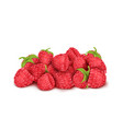 heap of ripe raspberry summer berry fruit vector image