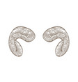 realistic drawing horns ram hand drawn vector image