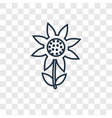 sunflower concept linear icon isolated on vector image vector image