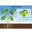 Anatomy of the plant cell vector image vector image