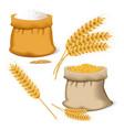 barley wheat icon set realistic style vector image