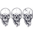 detailed graphic white human skulls and jaws set vector image vector image