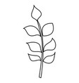 line nature branches with exotic leaves design vector image vector image