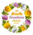 Chrysanthemum vector image