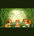 group tiger at bamboo forest vector image vector image