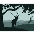 monotonic of two elks vector image vector image