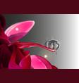 peony with dew drop vector image