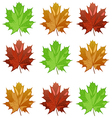maple leaves3 vector image
