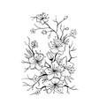sakura branch hand drawn vector image vector image