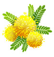 yellow mimosa bouquet fluffy flower view from vector image vector image