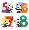 set of cute baby panda bears with numbers vector image