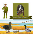 english springer spaniel vector image