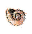 sea shell from a splash of watercolor hand drawn vector image