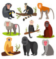 different breads monkey character animal wild vector image vector image