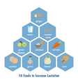 Foods to increase lactation vector image vector image