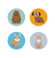 group of dog breeds vector image vector image