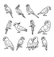 set parrot icons in thin line style vector image vector image