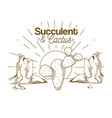 succulent and cactus desert plants vector image