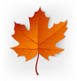 autumn leaf leaf isolated on a white background vector image