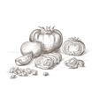 hand drawn tomato vector image vector image