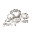Hand drawn tomatos vector image vector image