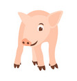 pig flat style front vector image vector image
