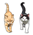 two cats with their tails up walking frontally vector image vector image