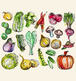 collection of hand-drawn watercolor vegetables vector image