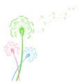 colorful dandelion flowers with flying seeds on vector image vector image