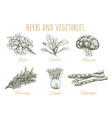 herbs and vegetables sketch collection vector image
