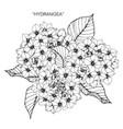 Hydrangea flower drawing