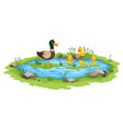 mother duck and little ducklings swims vector image
