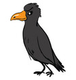angry raven on white background vector image