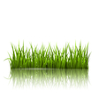 Green grass lawn with reflection on white Floral vector image