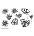 set hand drawn black and white celandine vector image vector image
