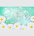white daisy chamomile flowers on blue sunny sky vector image vector image