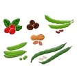 Assorted fresh cartoon legumes and nuts vector image
