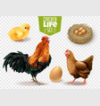 chicken life transparent set vector image