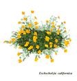 Eschscholzia californica vector image vector image