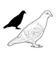 pigeon two vector image vector image