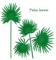 set tropical palm leaves realistic drawing in vector image vector image