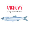 anchovy vector image vector image